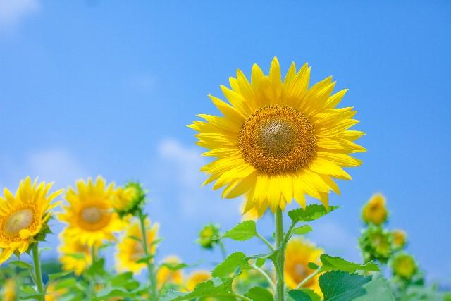 8月~10月の花粉症の時期