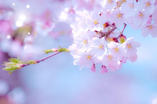 イベントでの花粉症にならない防止対策