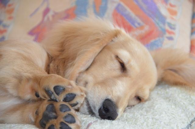 ペットが招く鼻水や花粉症は添い寝によって起きている可能性も
