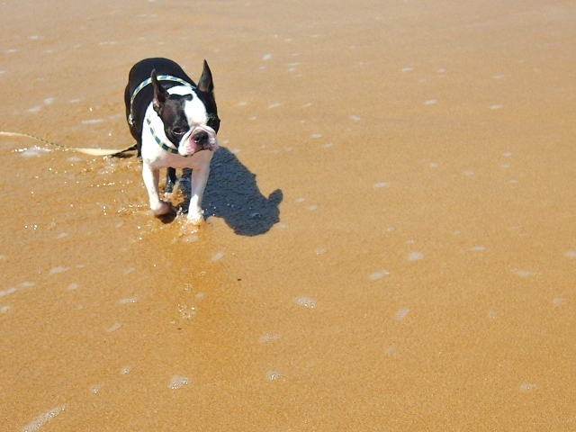 ペットが招く花粉症や鼻水にはお散歩に注意